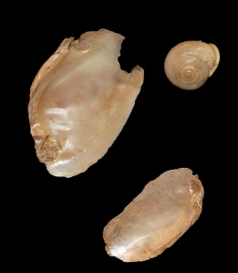 Paleo-Trinkets