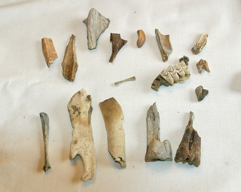 Bone Shards & Fossilized Deer Teeth