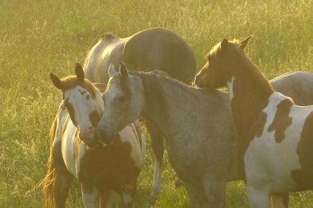 The Happy Herd