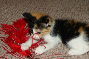 Claudia Jean and her feather boa.