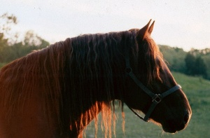 Our stallion, Theoden, in the sunrise.