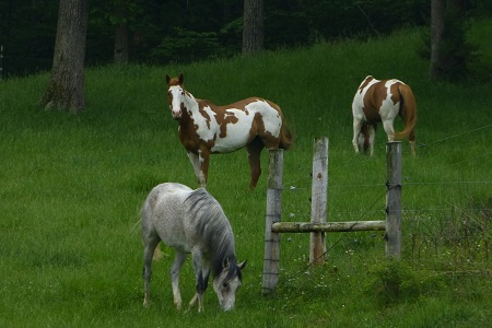 The Horses on Mockingbird Hill