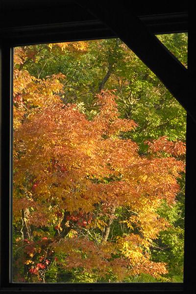 Day 5 - September 26 The Golden Hickory