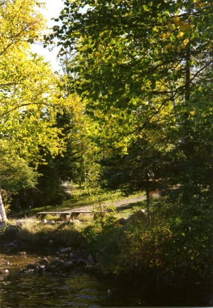 Bankside in Autumn