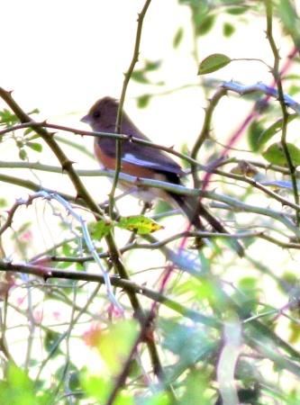 The Mystery Bird