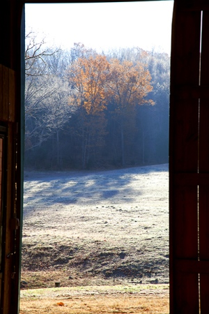 November 15 - Frosty Morning