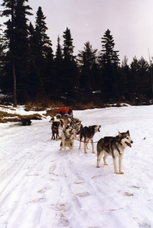 The Dogs Arrive at Our Cabin