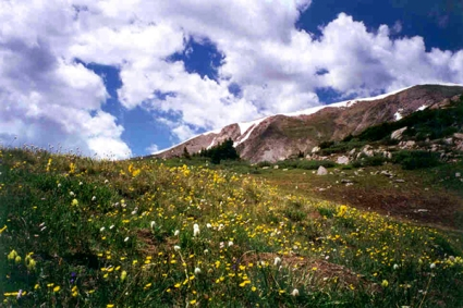 Continental Divide Wildflowers web